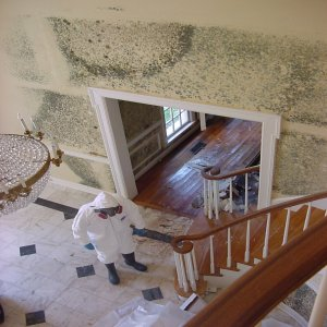 'Moldy House-moldprotectyourlivingpace-toxicmold'